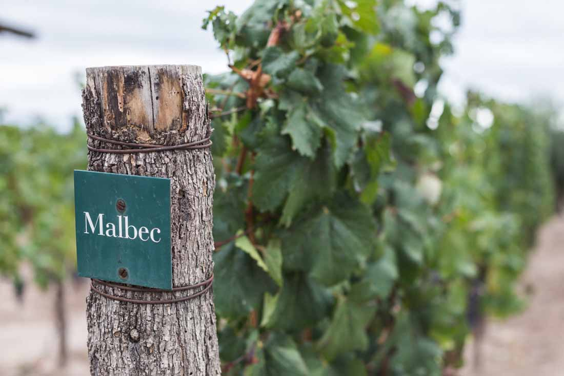 differences between malbec and merlot