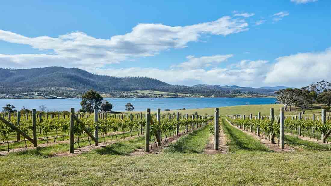 cool climate Tasmanian wines